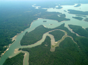 FlorestaAmazonica1