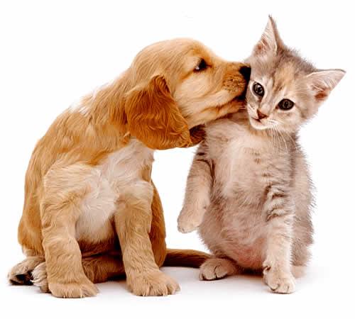 Vacinação-canina-e-felina-que-previne-contra-doenças-letais-ainda-geram-dúvida-entre-os-proprietários-PETREDE1