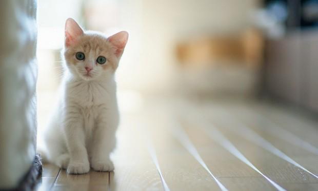 gatos-melhores-artigos-2