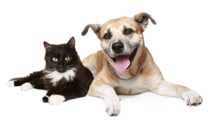 catdog1-Cópia-Cópia